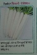 Shivani Fresh Radish