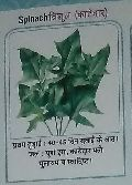 Trishul Fresh Spinach