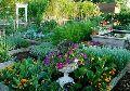 Kitchen Garden Installation Services