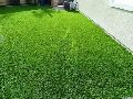 Landscaping Grass Installation Services