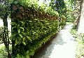 Vertical Garden Installation Services