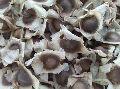 Moringa seed PKM 2