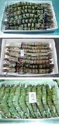 Frozen Vannamei Shrimp & Black Tiger Shrimp