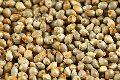 Pearl Millet Seeds