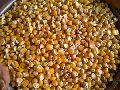 Corn ,Yellow Maize