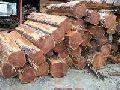 teak timber logs