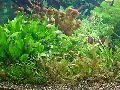 Planted Aquarium 003