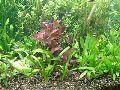 Planted Aquarium 004