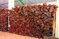 Red Sandal Wood Logs