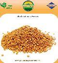 Red sudan grass seeds ( Sorghum Sudangrass )